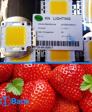 ال ای دی فول اسپکتروم فول چیپ 50 وات مخصوص رشد میوه به ویژه توت فرنگی